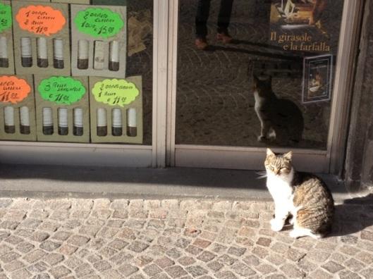Il gato del'Orvieto