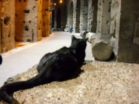 Colosseum cat