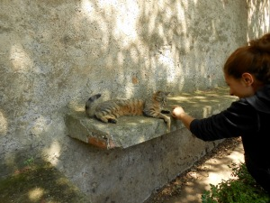 Giulia, a volunteer at Piramide's cat sanctuary
