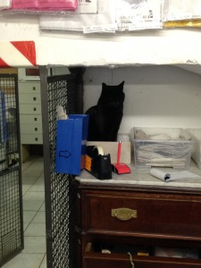 Cats inside the Argentina shelter make themselves at home.