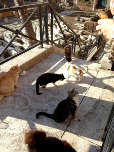 Cats on the stairs of Largo Argentina